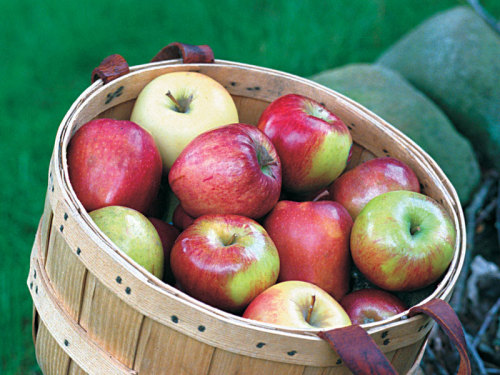 How to Grow No-Spray Organic Apples