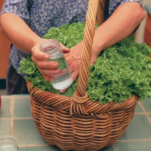 Harvesting basket potato basket Shopping Basket Wicker Mushroom Basket Garden Basket Flower Basket