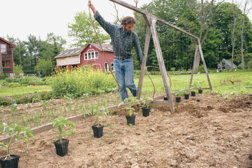 A Freestanding Tomato Trellis Improves Yields and Keeps the Garden Neat