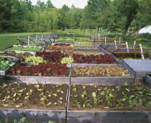 Raised beds turn into cold frames