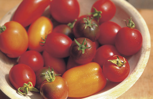 Selecting and Growing Great Paste Tomatoes