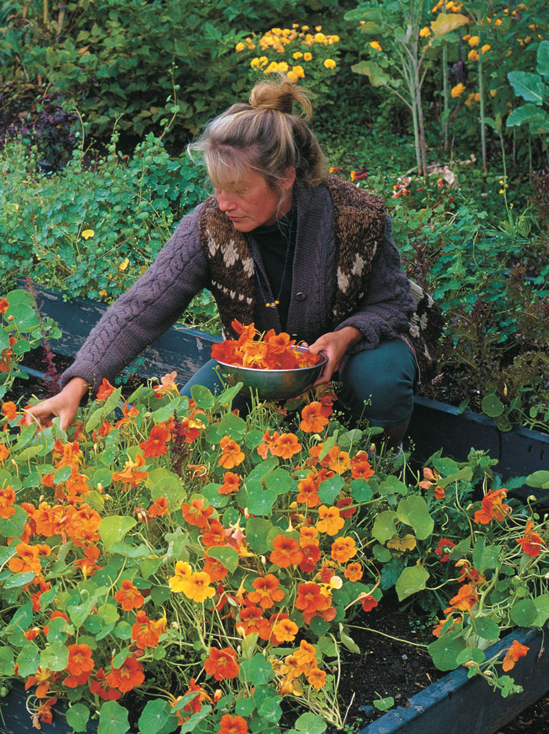 Easy to grow, nasturtiums add a spicy bite and a splash of color to summer meals.