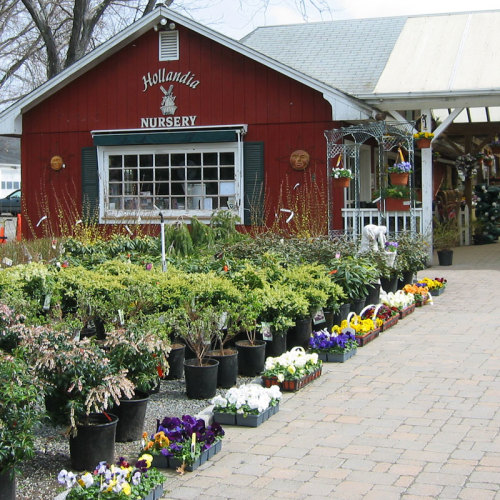 Hollandia Nurseries, Bethel, Connecticut
