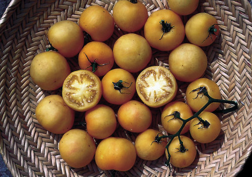 Beyond Beefsteak Tomatoes: In Search of the Unusual