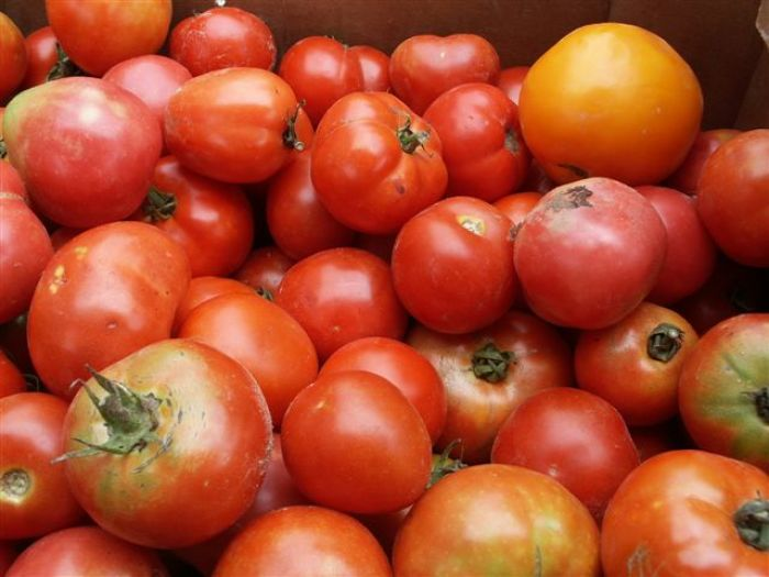 Tis' the  Season...for Tomatoes that is...