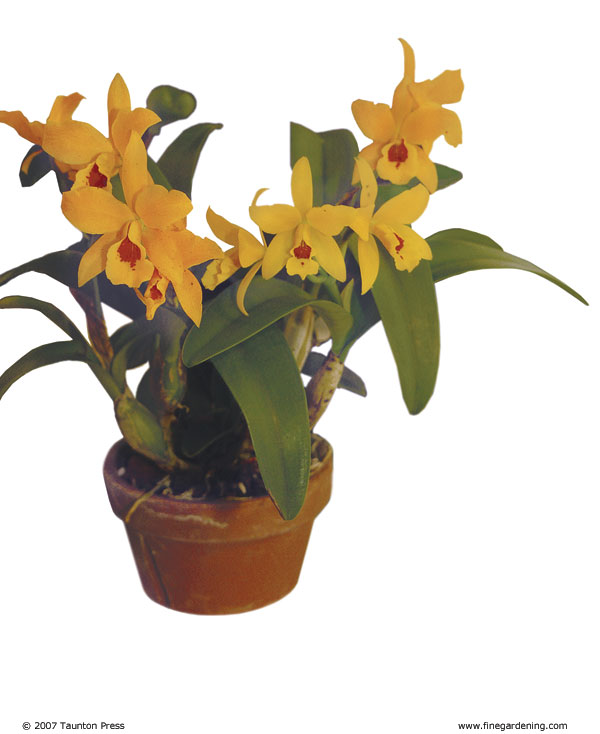 Orchids need to be repotted when one or more of the following occurs: the orchid is top heavy, a new orchid shoot is growing outside the container, ...
