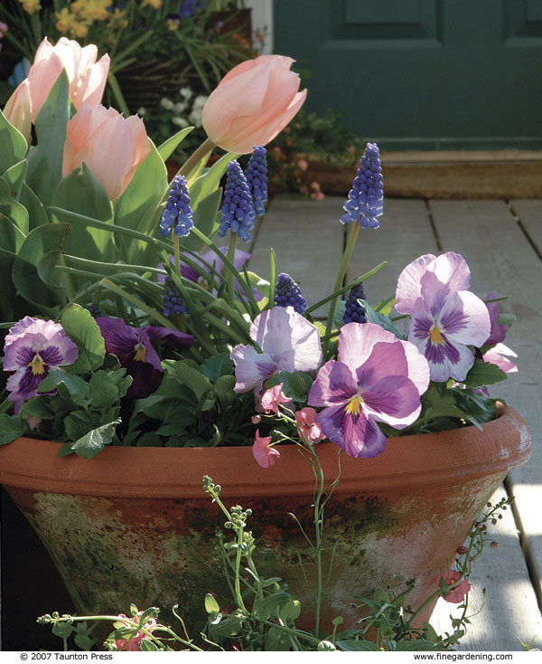 Celebrate Spring With Cool Season Containers Finegardening