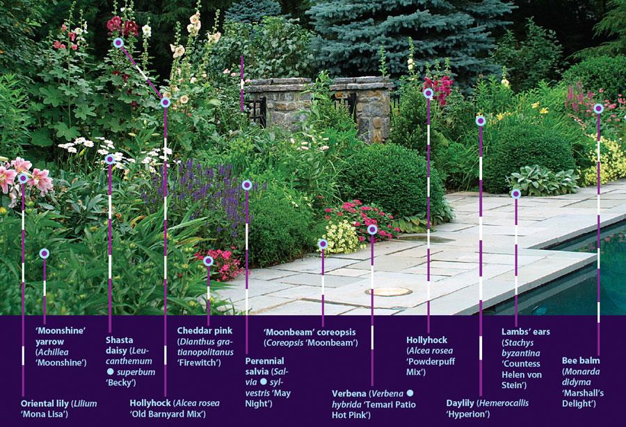 25 Robust Summer Bloomers Finegardening