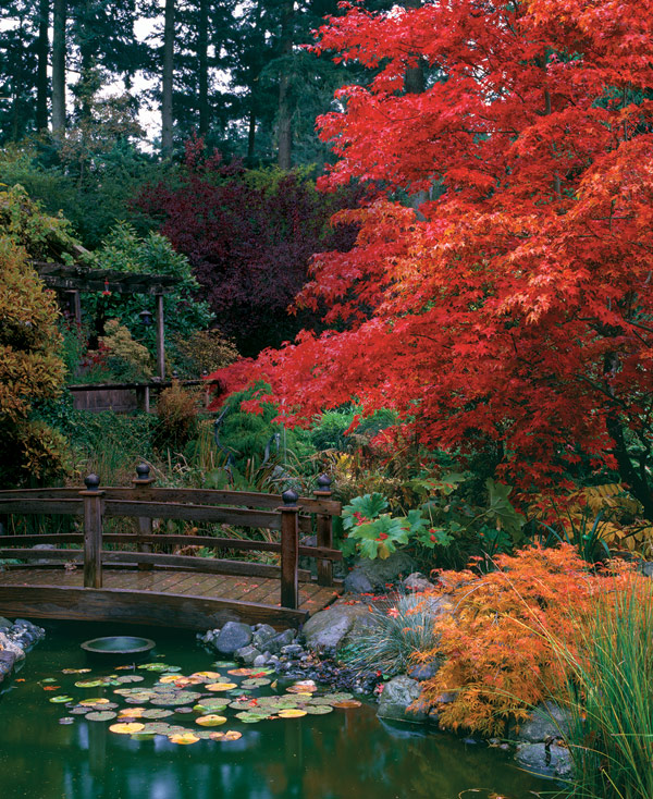 Enchanting Japanese Maples Finegardening