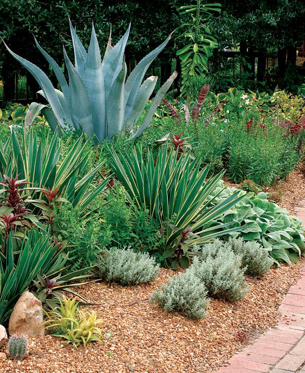Maroon Garden Ideas: Designing With Spiky Plants