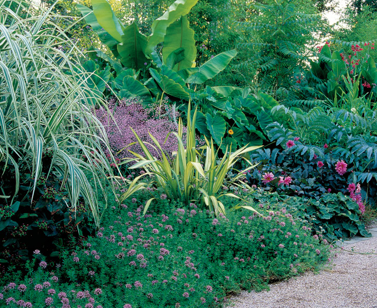 Designing With Spiky Plants Finegardening