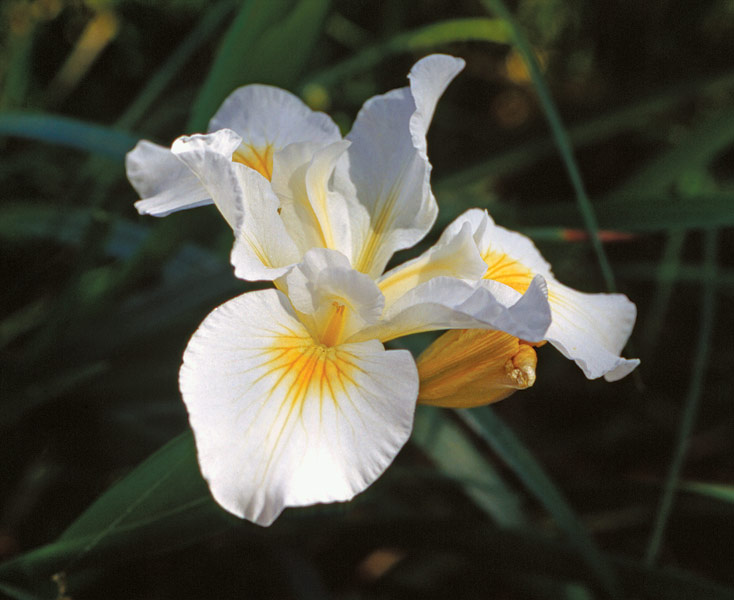 Spectacular Spring Bloomers Finegardening