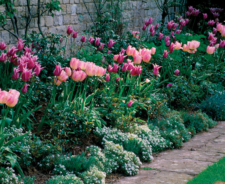 Sweetly Scented Annuals Finegardening