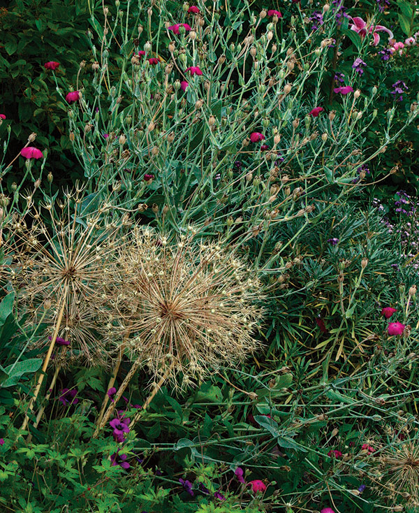 Be Bold With Fine-Textured Plants