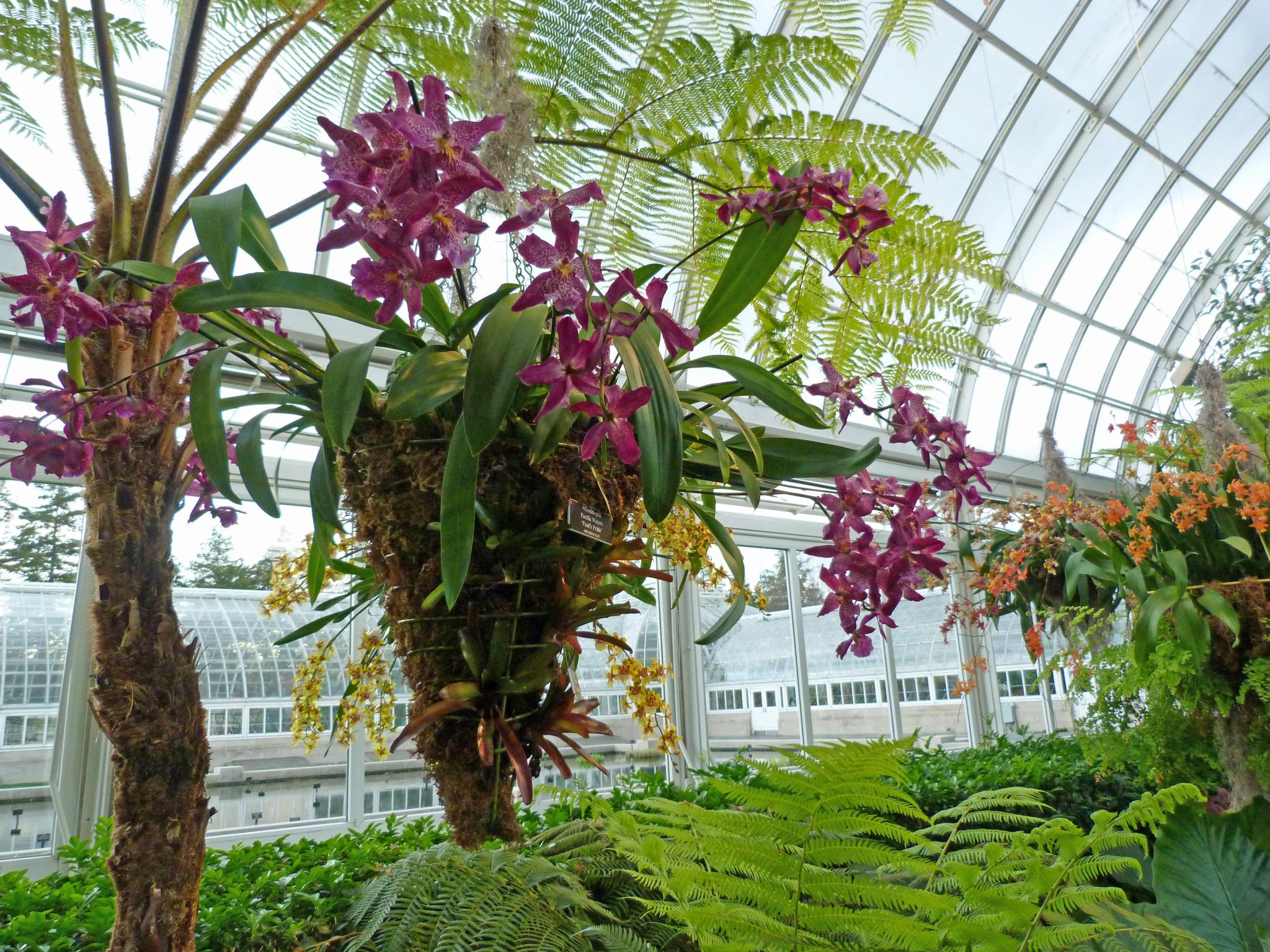 The orchid show at the new york botanical garden - Bronx botanical garden free admission ...