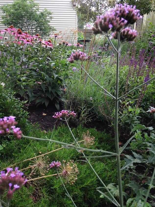 An Urban Garden Featuring A Circle Of Grass