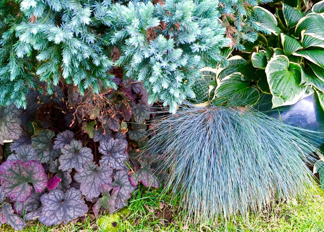 Cool Blues Tame The Heat In The Pacific Northwest Finegardening