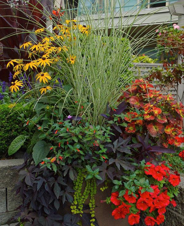 Fine Gardening Magazine & Designer Secrets for Over-the-Top Pots - FineGardening