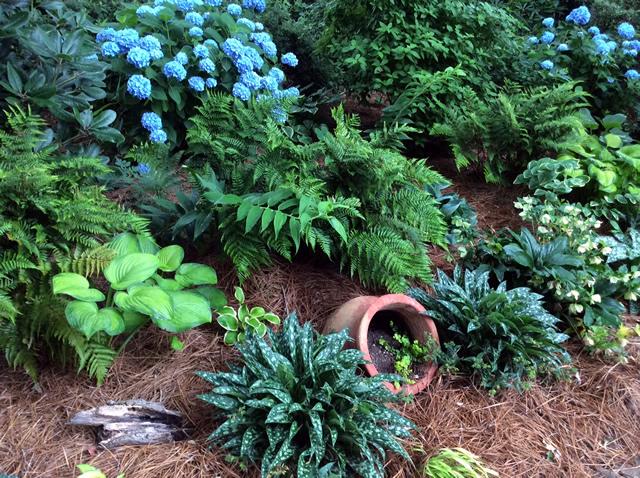 Hostas And Hydrangeas Finegardening