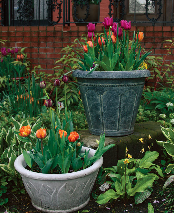 248 & How to Plant Tulips in Pots - FineGardening