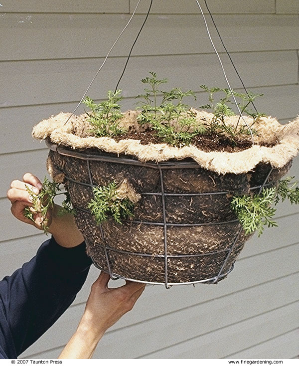 Attach hangers to the rim and hang the basket outside any time after your region's frost-free date.