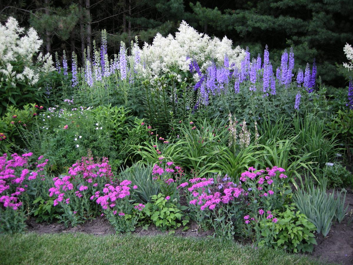 Садовые цветы дельфиниум: фото, описание, посадка, уход в 715