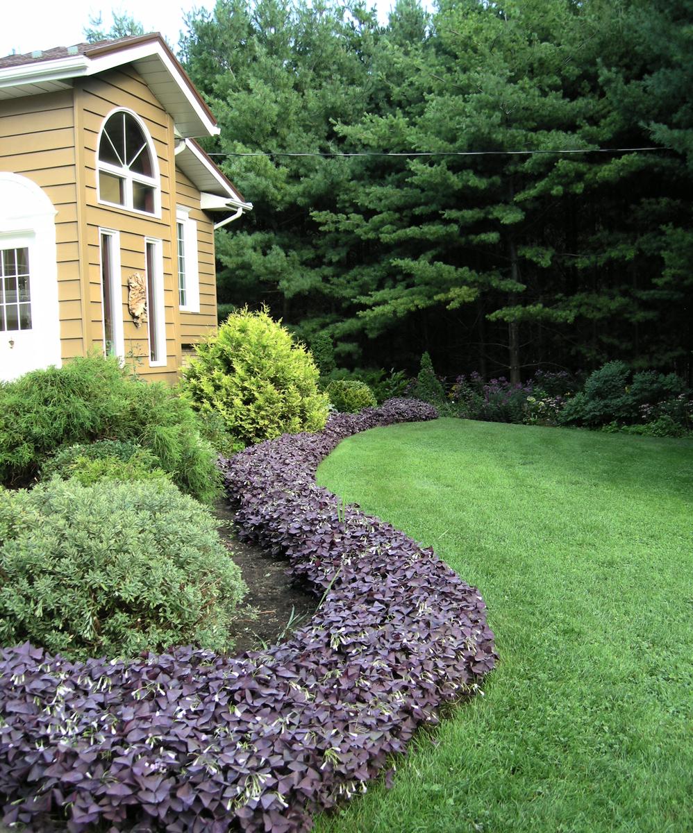 More From Lorraine's Garden In Ontario