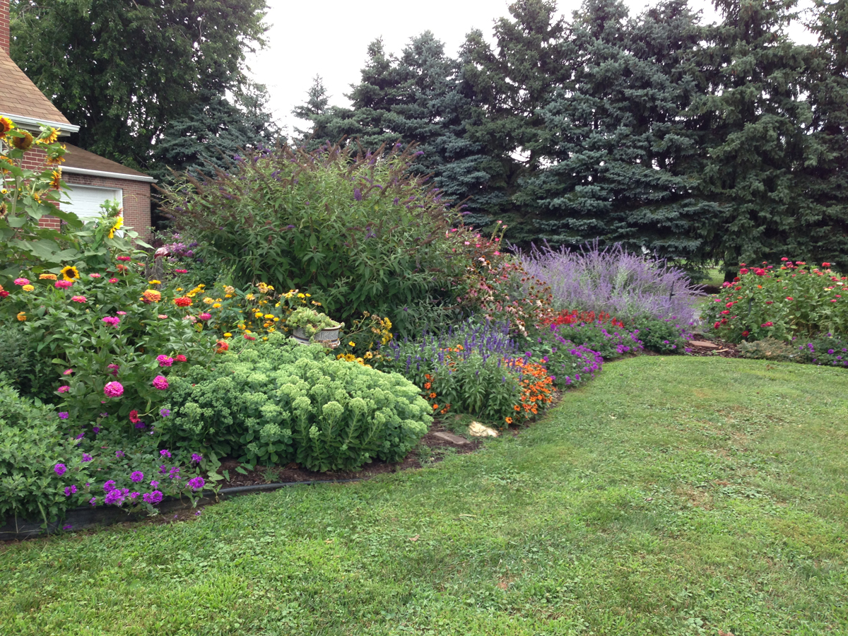 Sally S Traffic Stopping Front Garden In Maryland Finegardening