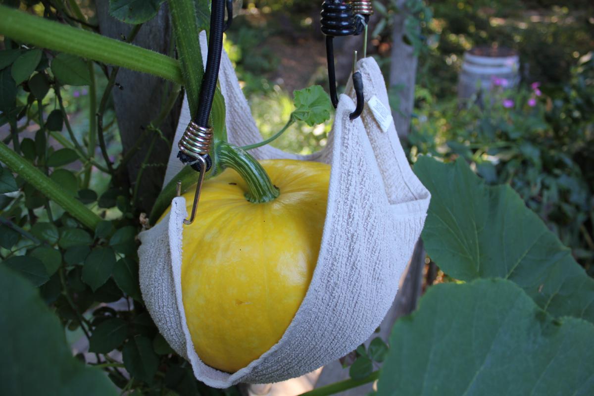 Pumpkin slingshot