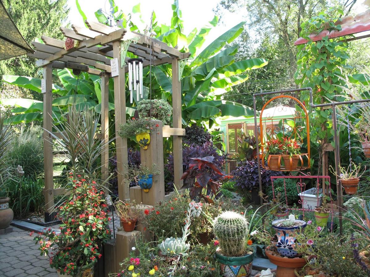 Bill S Tropical Garden In Ohio Finegardening
