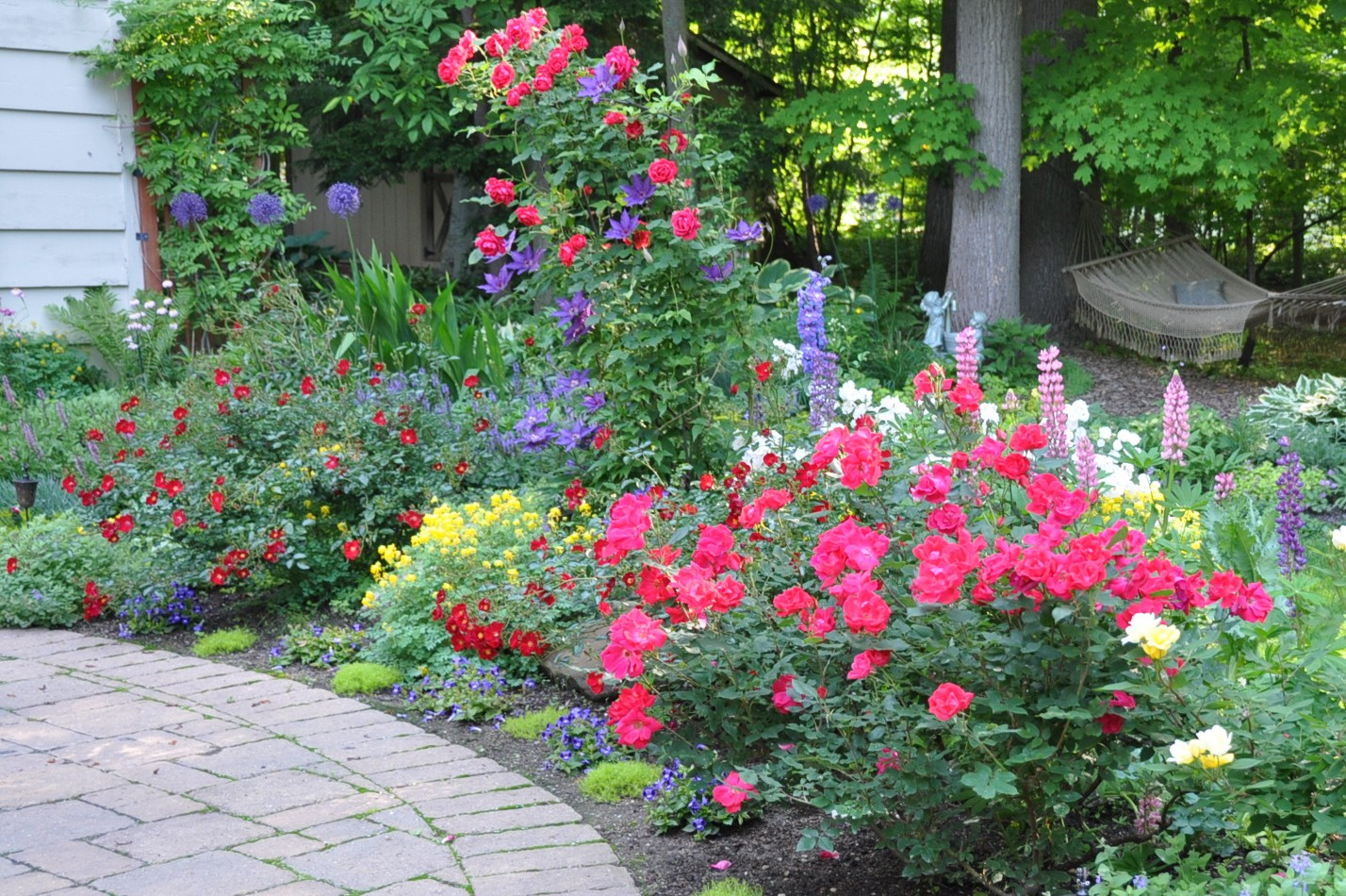 Color In Daniela S Garden Ohio Finegardening