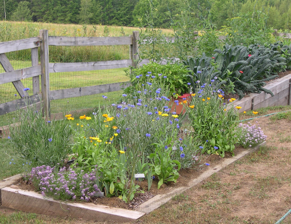 Harriet S Vegetable Garden In Maine Finegardening
