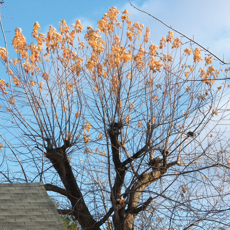 Five Common Pruning Mistakes, and How to Fix Them
