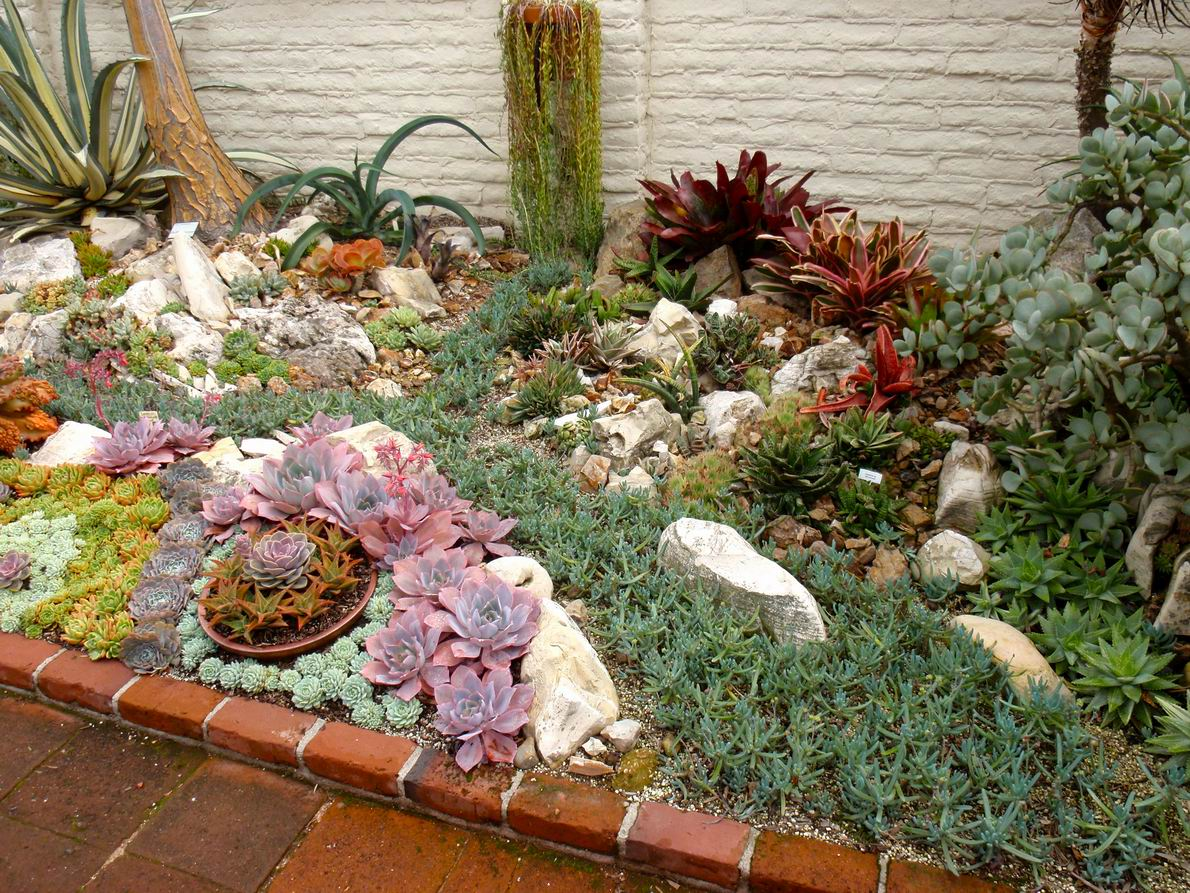 Reader Photos A Gem Of A Succulent Garden Finegardening