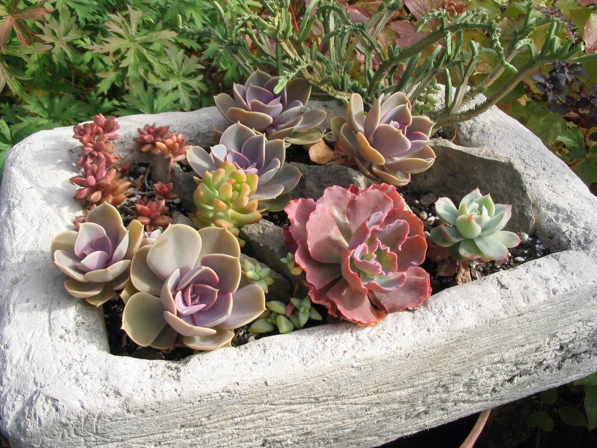 Succulents In Cold Climates Yes You Can Finegardening