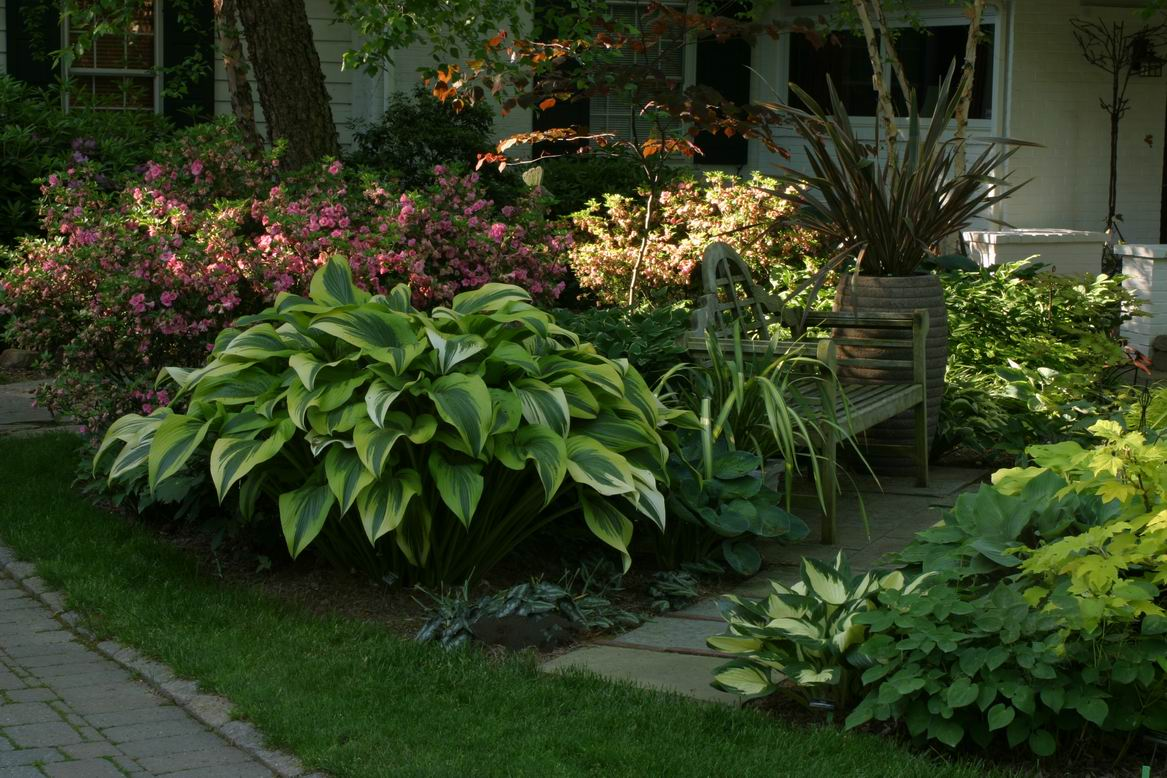 The Most Beautiful Hosta In The World Finegardening