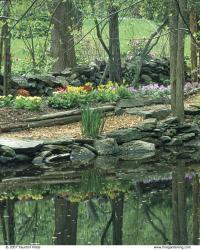 Primroses bloom in the woodland garden