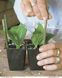 Place stakes at the corners of each tray to support the roof of your mini-greenhouse.