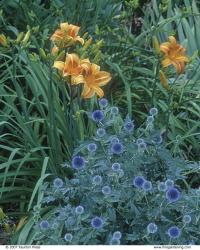 Plant Combinations That Work Finegardening