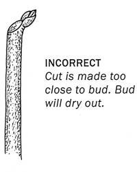 incorrect way of cutting a bulb
