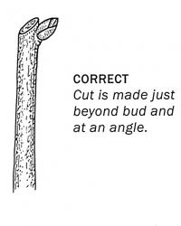 correct way of cutting a bulb