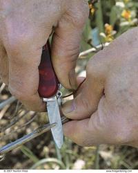 wound shrubs stem