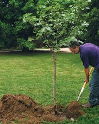 hoe planting