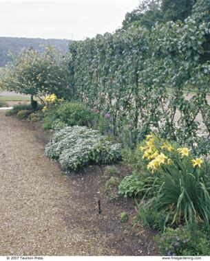 Espalier - FineGardening
