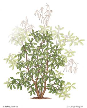 Pruning For Shape Enhances The Plant S Natural Habit And Form
