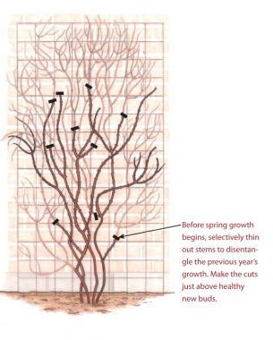 Repeat Bloomers Diagram