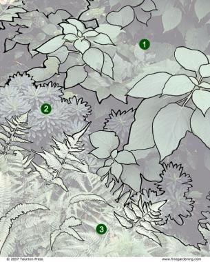 zones for leaf patterns
