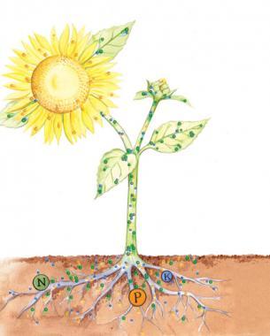 Fertilizing Basics Finegardening