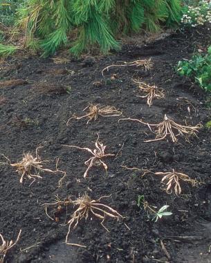 dividing soil