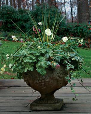 Fine Gardening Magazine & Four Container Planting Ideas for Autumn - FineGardening